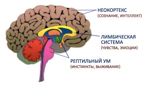 triune_brain_thumb